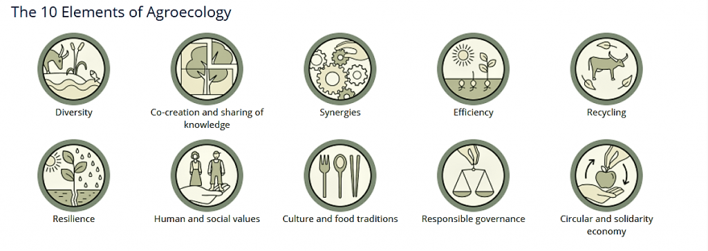 FAO Agroecology